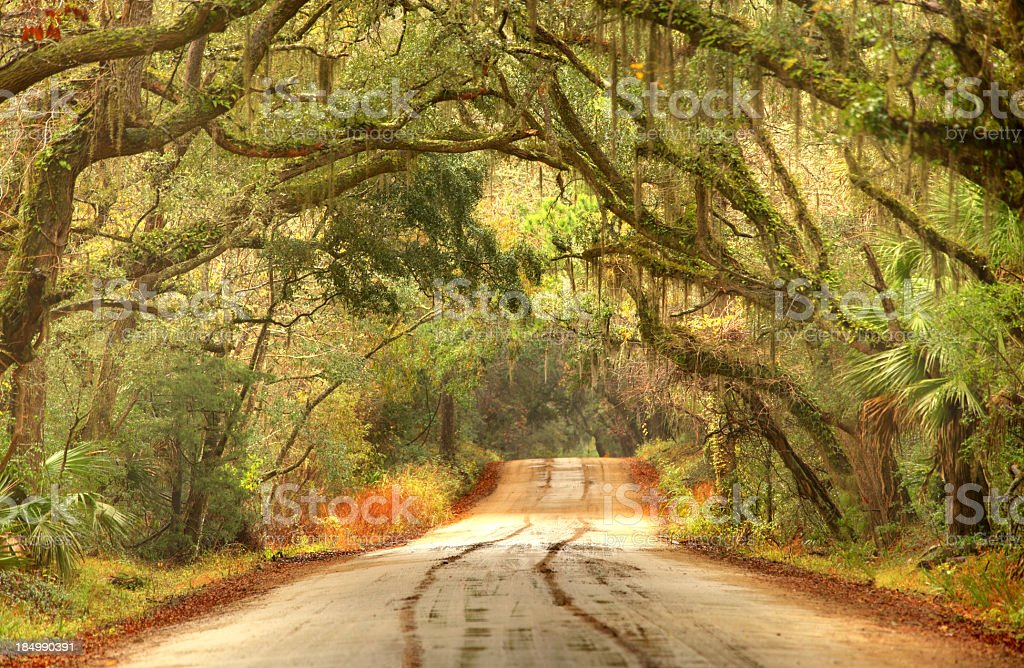 Rural southern road in the South Carolina lowcountry near Charleston royalty-free stock photo