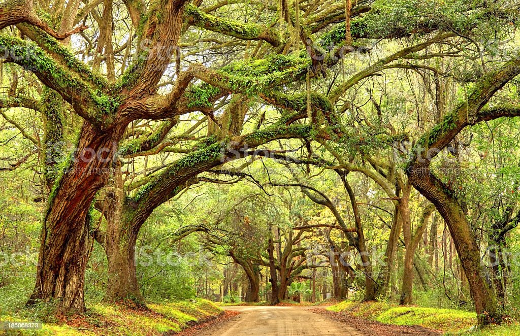 Rural southern road in the South Carolina lowcountry near Charleston stock photo