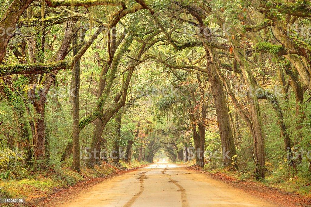 Rural southern road near Charleston, South Carolina royalty-free stock photo