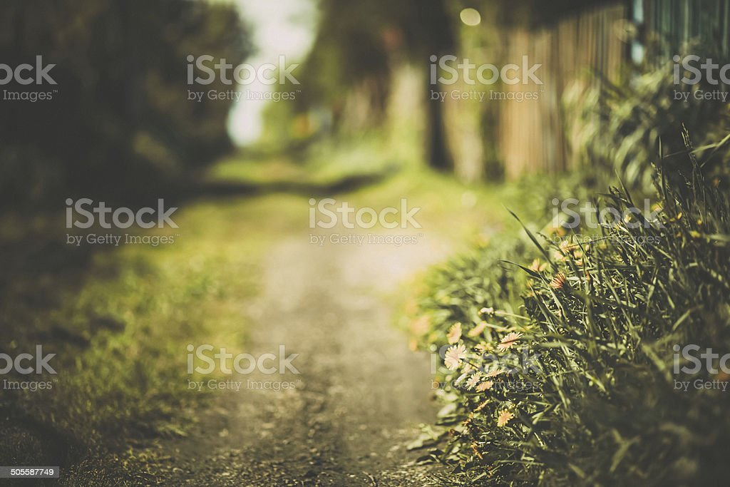 Rural street in bright dandelions stock photo