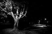 Rural street live at night