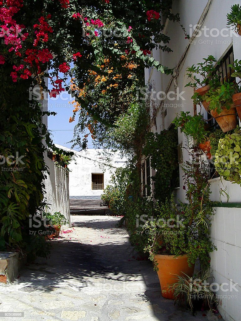 rural street with Flowers royalty-free stock photo