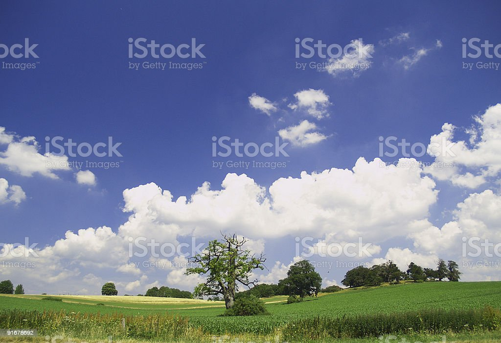 Rural Summer royalty-free stock photo