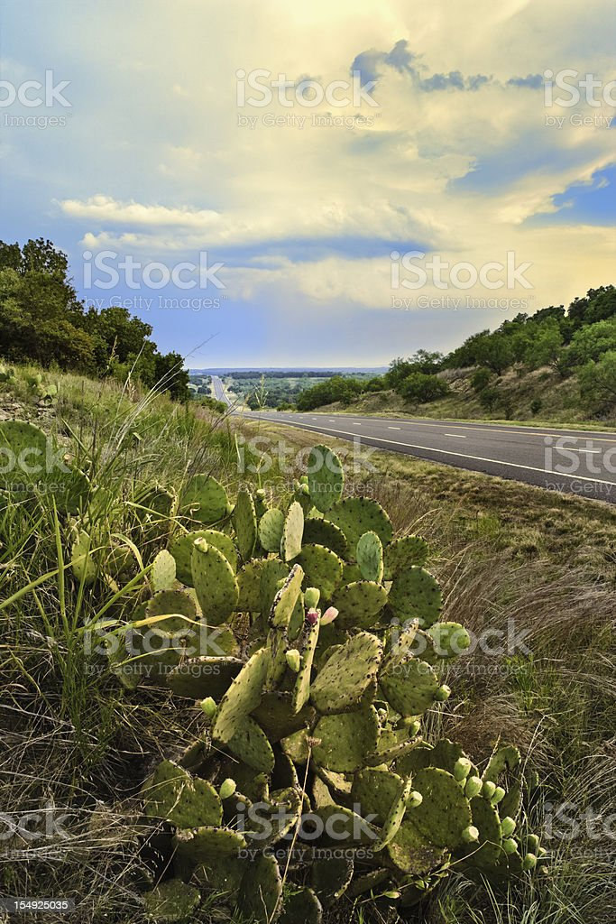 rural Texas highway, prickly pear cactus, Jacksboro, TX royalty-free stock photo