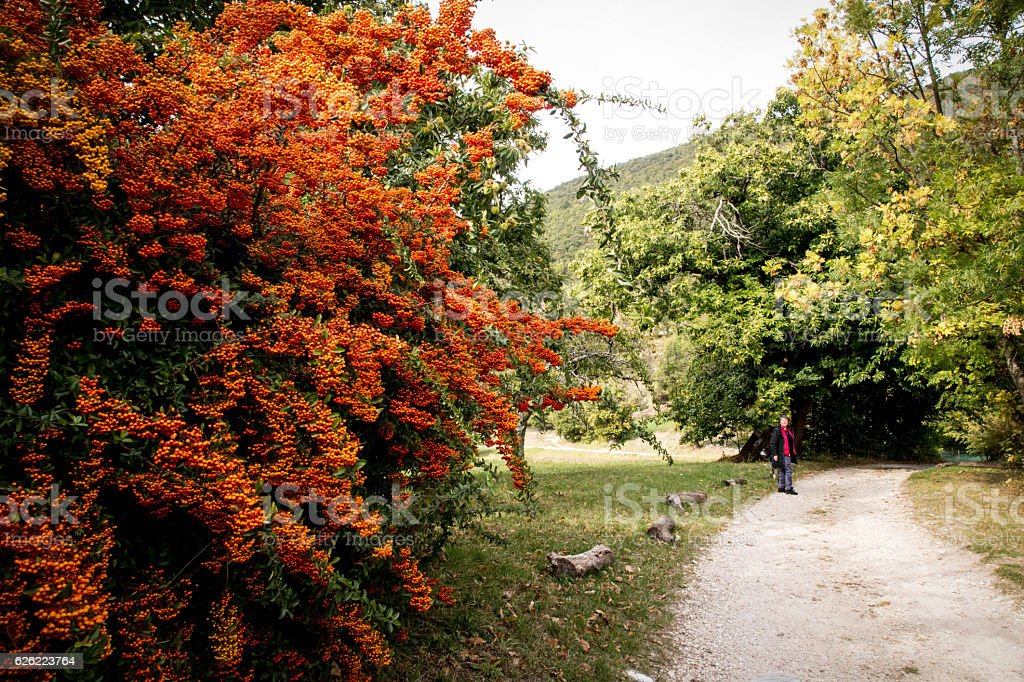 Rural track in Provence, france stock photo