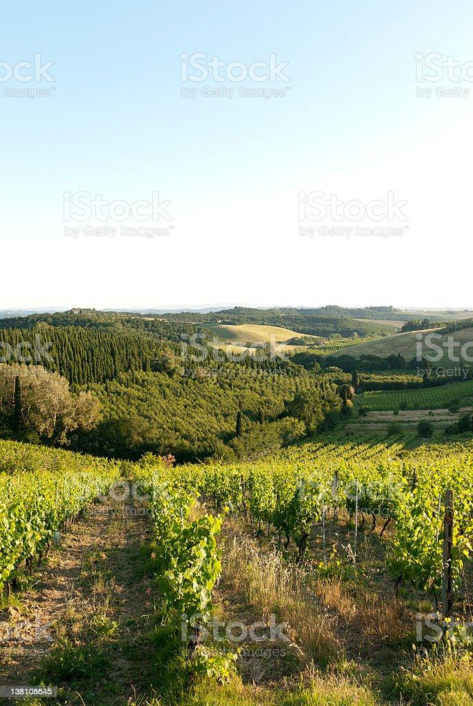 Rural vineyard countryside landscape at sunset stock photo