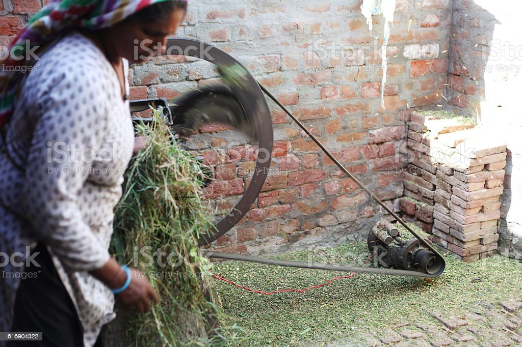 Rural women cutting chaff for domestic cattle stock photo