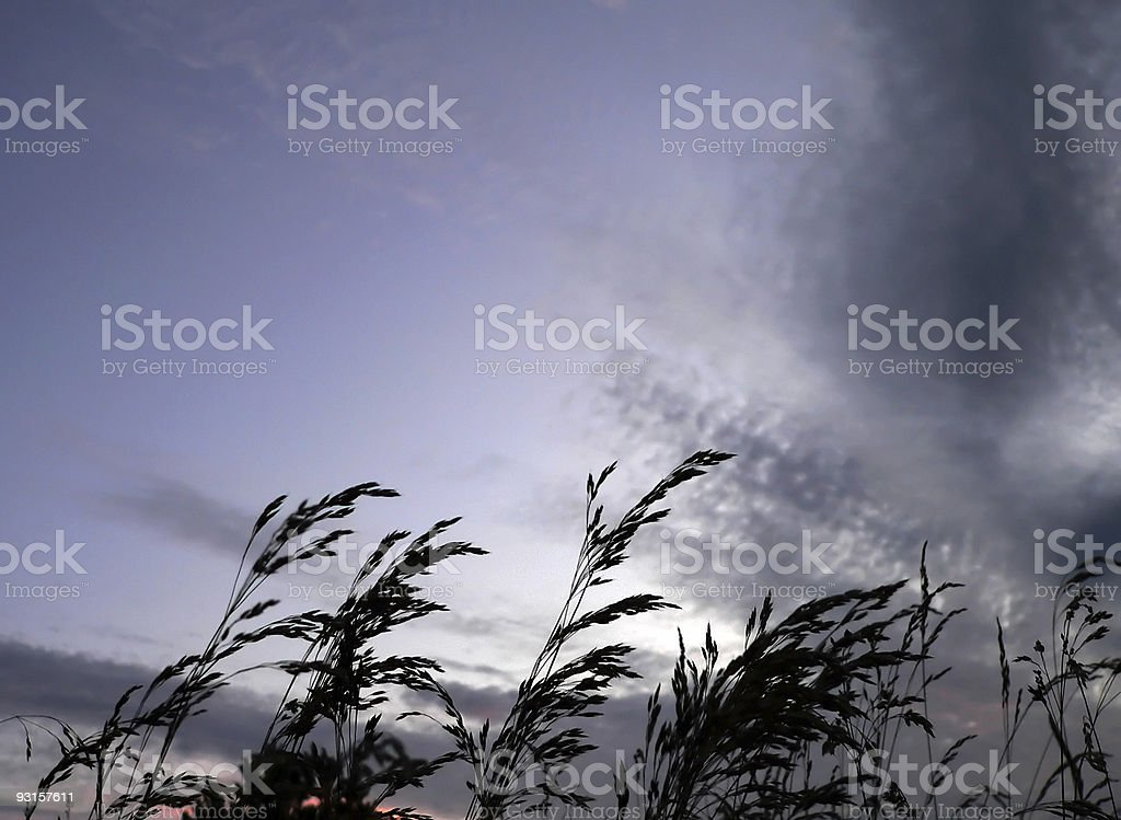 Rush against a dark sky by sunset royalty-free stock photo