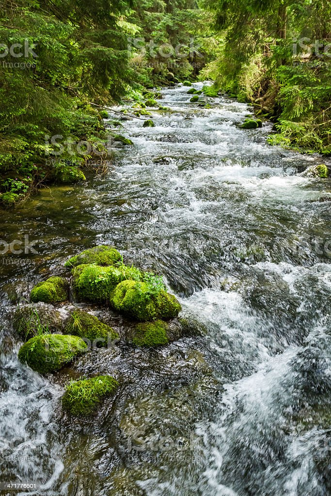 Rushing mountain stream in the forest stock photo