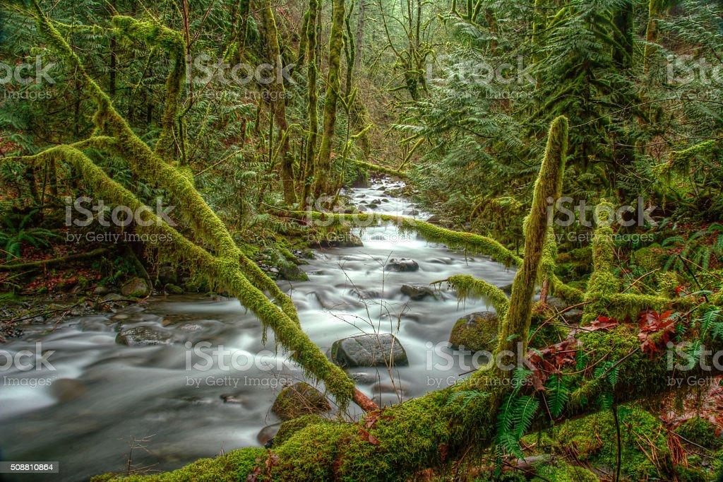 Штурм stream» и moss с потайной деревьев Стоковые фото Стоковая фотография
