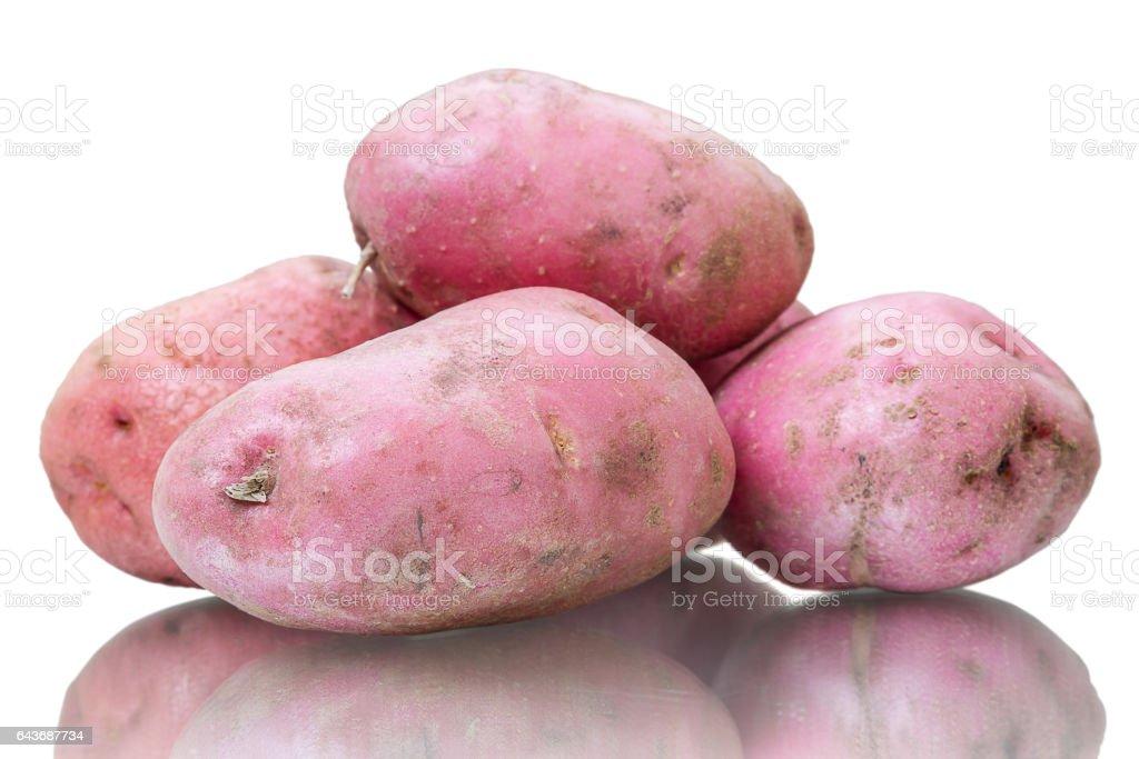 Russet potato on white stock photo