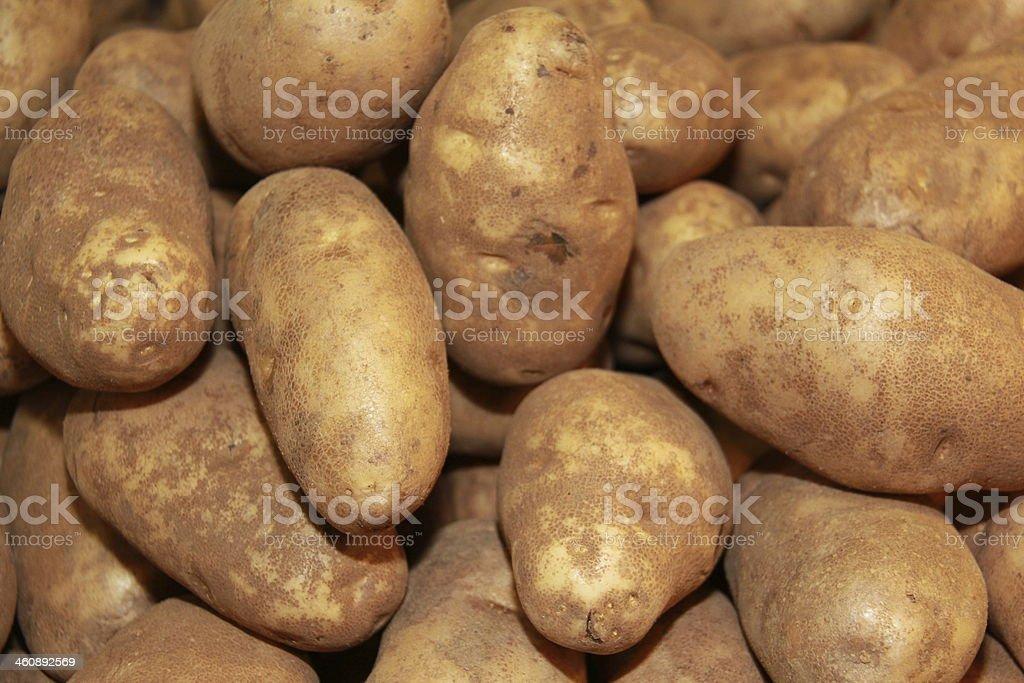 Russet Potatoes stock photo