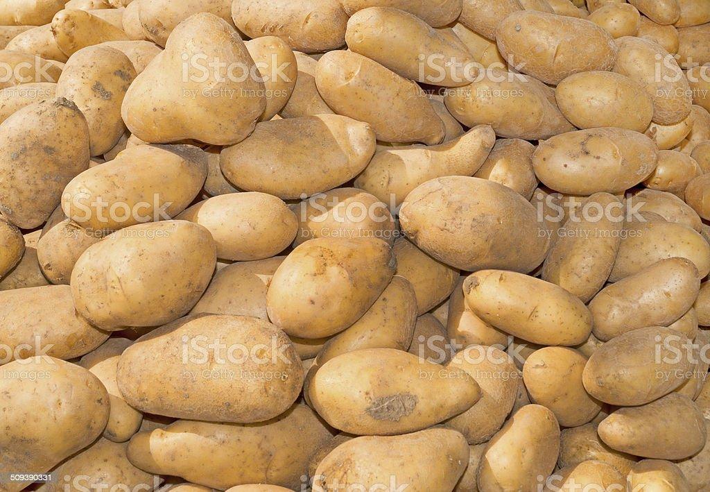 Russet White Potatoes Background stock photo