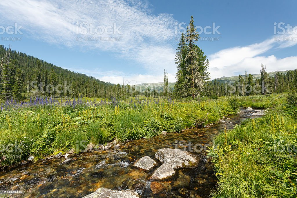 Russia. Ergaky. View of the wood and river. stock photo