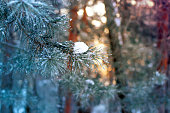 Russia, the sun's rays during the winter dawn in the forest