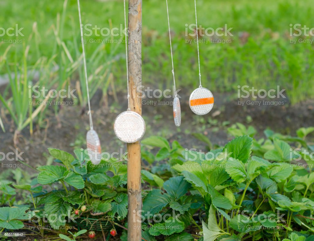 Russian folk remedy for repelling birds stock photo