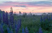 Russian nature, field, summer, meadow