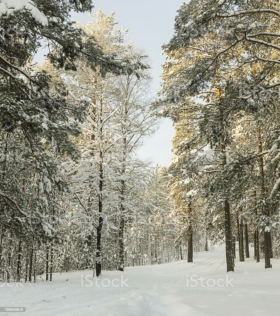 russian Winter forest snow road royalty-free stock photo