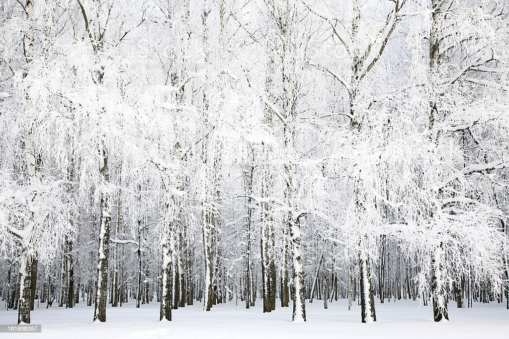 Russian winter in january royalty-free stock photo
