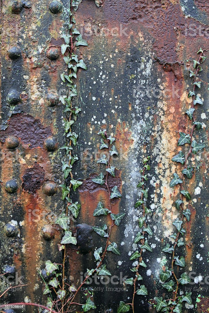 Rust and ivy royalty-free stock photo