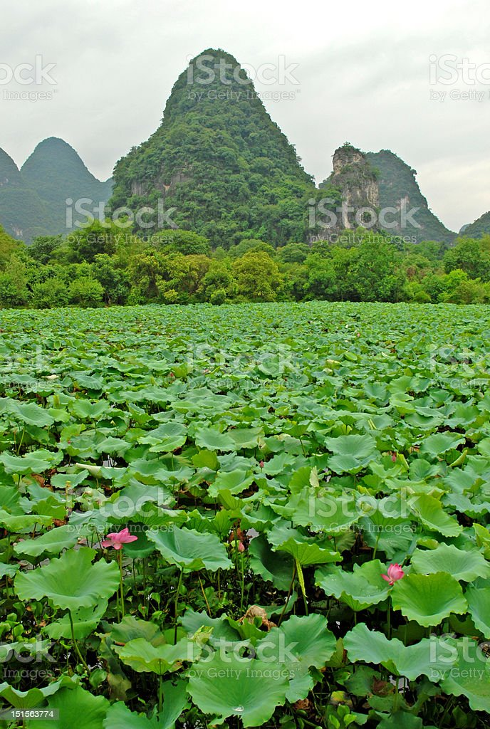 Rustic China royalty-free stock photo