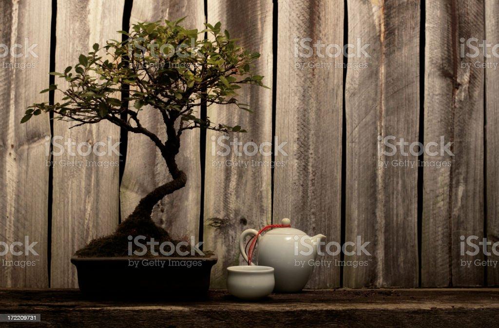 Rustic decorative arrangement of bonsai tree and tea cup stock photo
