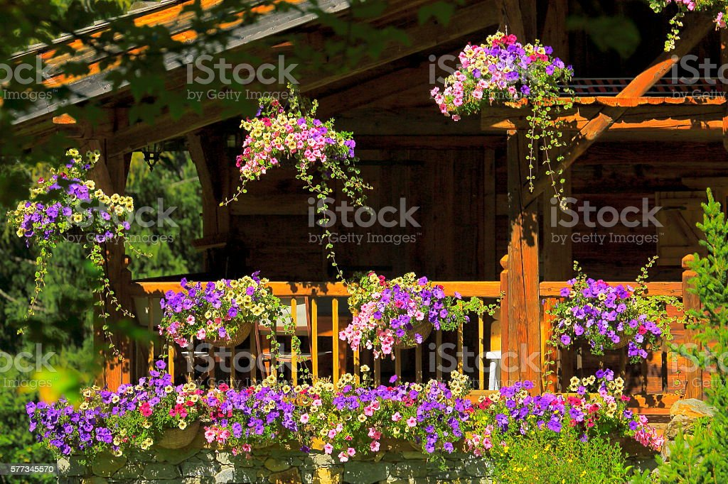 Rustic detail of colorful Violet full flower pots at spring stock photo