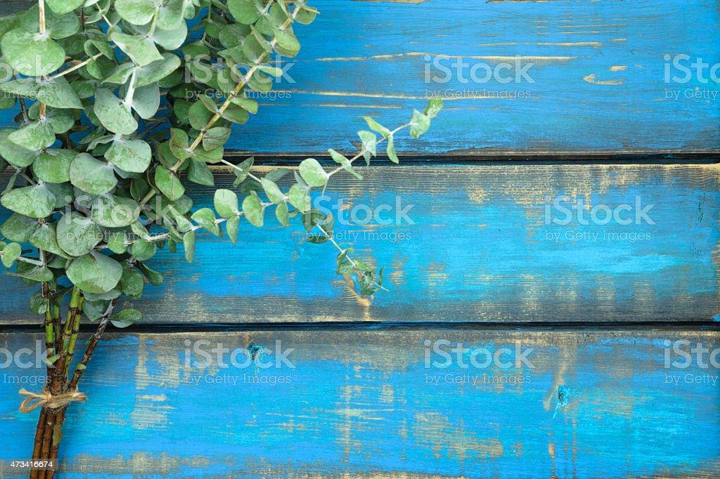 Rustic Eucalyptus stock photo
