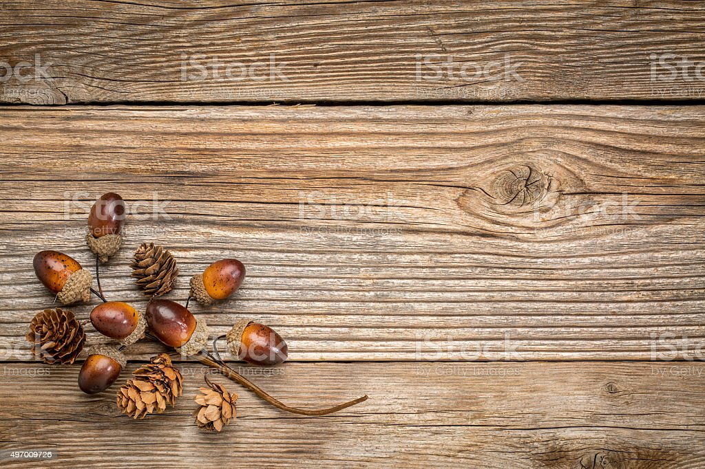 rustic grained wood with fall decoration stock photo