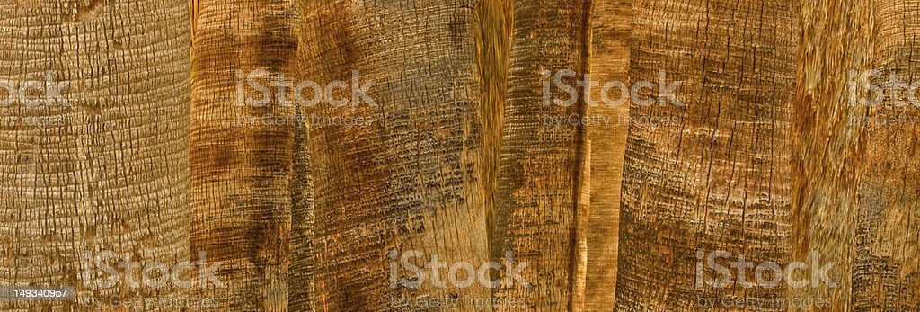Rustic Palms royalty-free stock photo