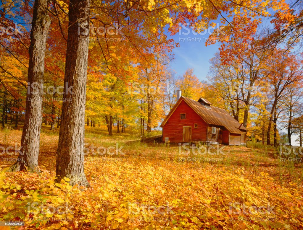 Rustic red cabin on a hill side among trees in autumn colors royalty-free stock photo