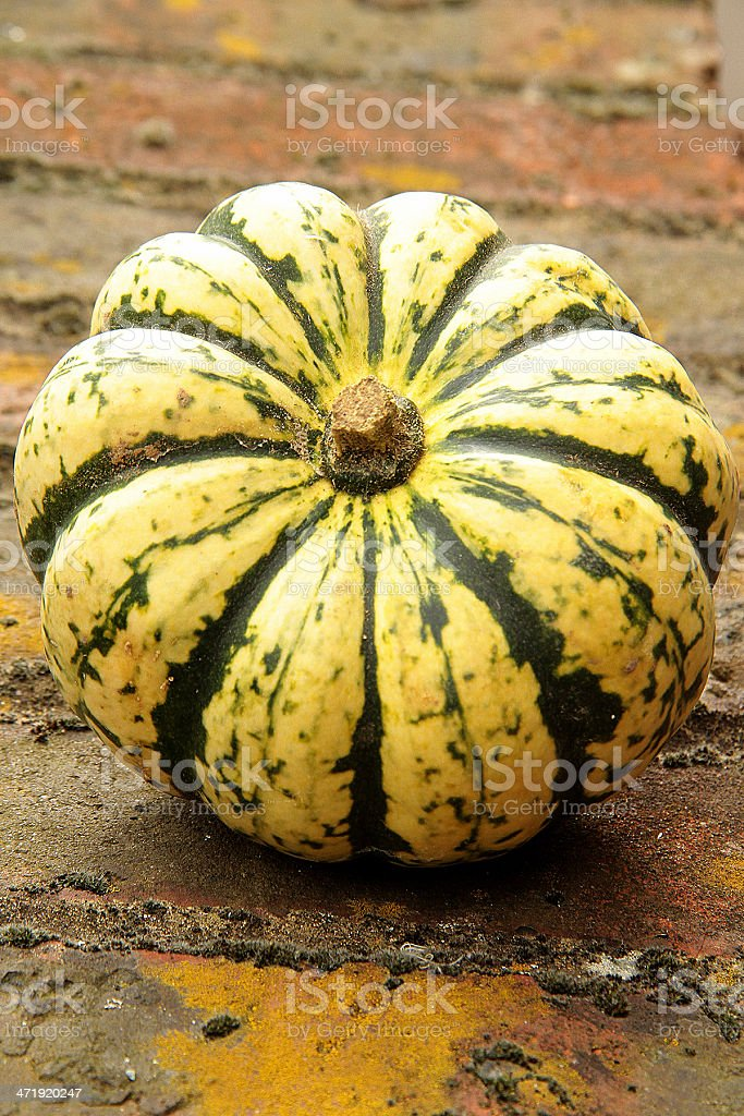 Rustic Still Life of Sweet Dumpling Squash royalty-free stock photo