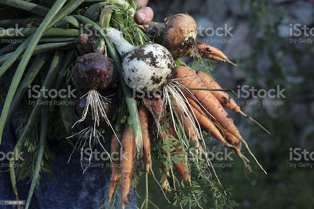 Rustic Vegetables stock photo