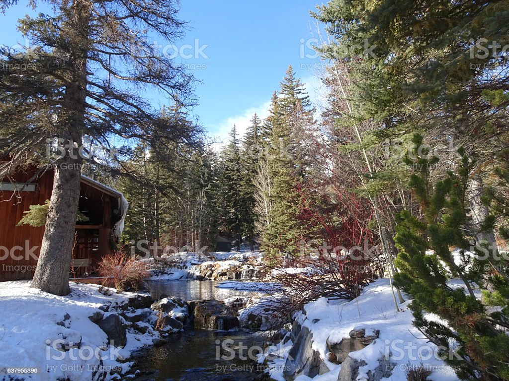 rustic winter forest scene in Sundance Utah stock photo