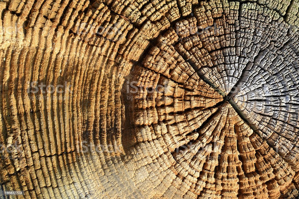 \'Rustic wood grains rich with shadows, color and abstract detail make...