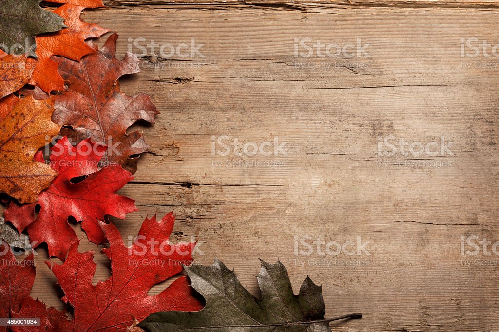 Rustic Wood with Fall leaves stock photo