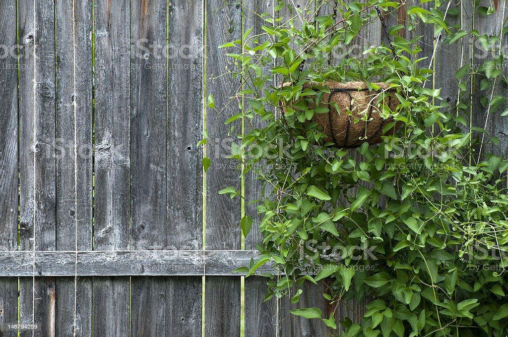 Cerca de madeira rústica e Vine foto royalty-free