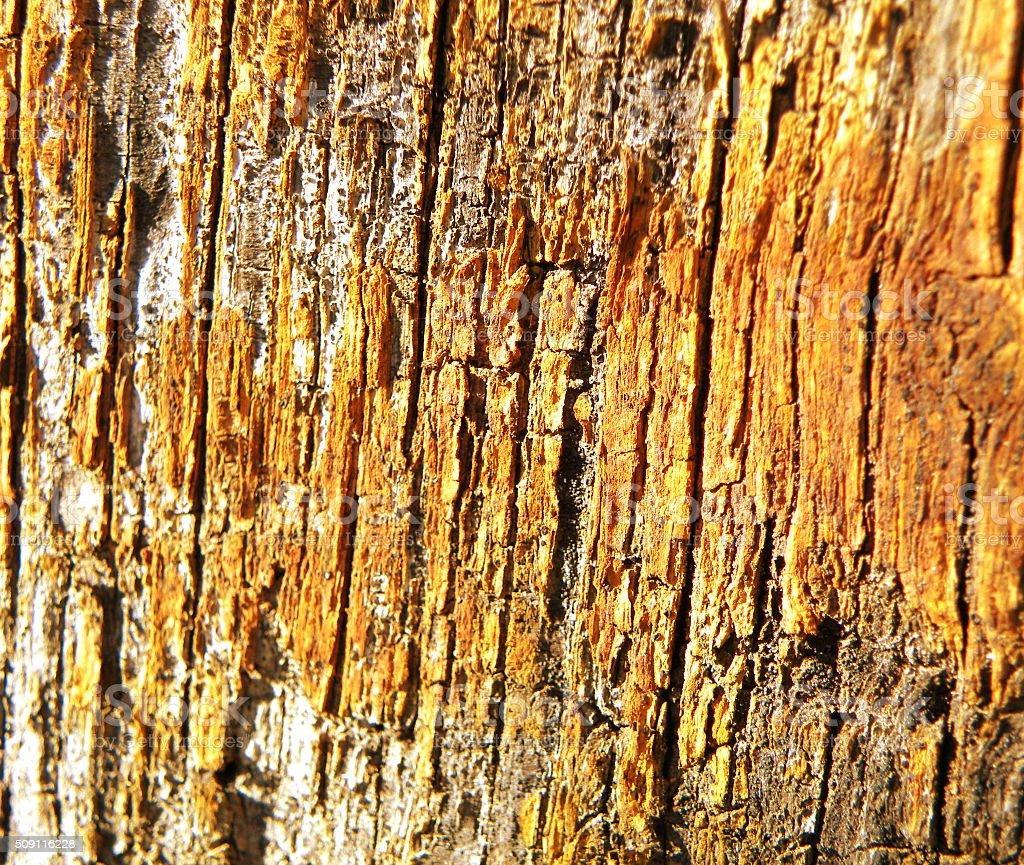 Rustic wood-material stock photo