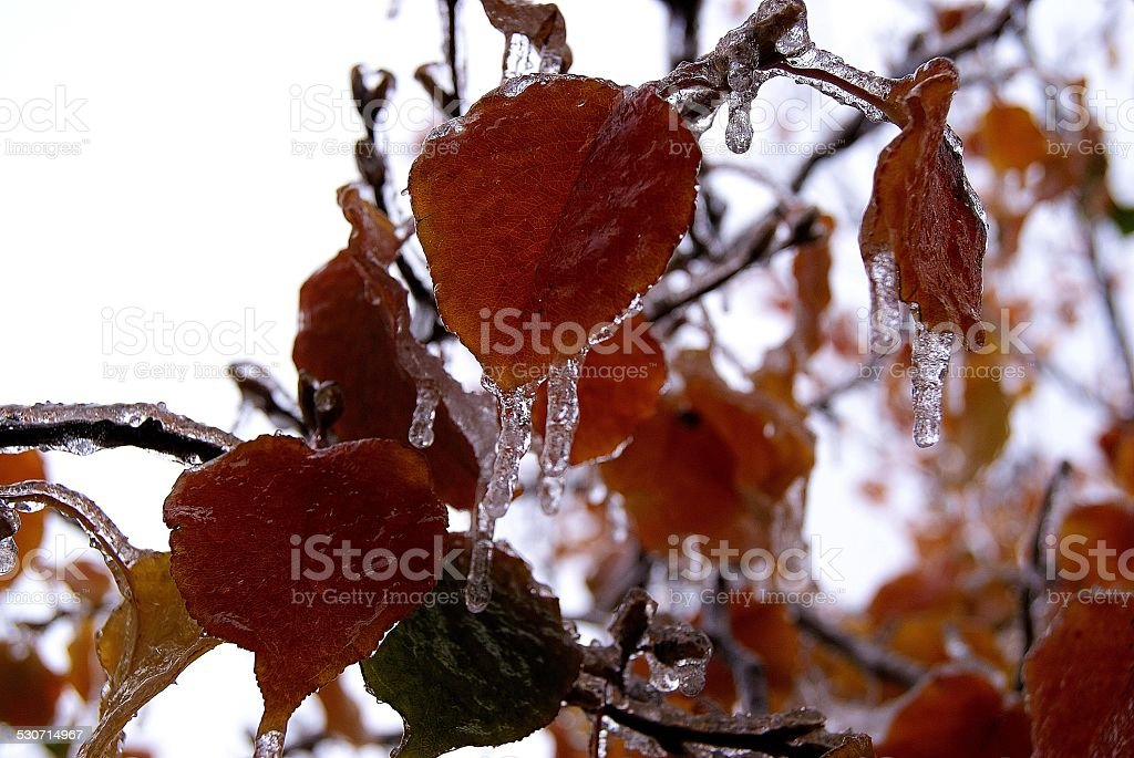 Rusting to Ice royalty-free stock photo