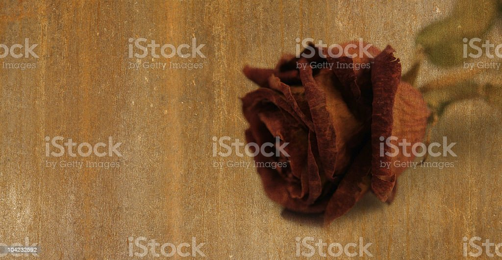 Rust-Rose texture royalty-free stock photo