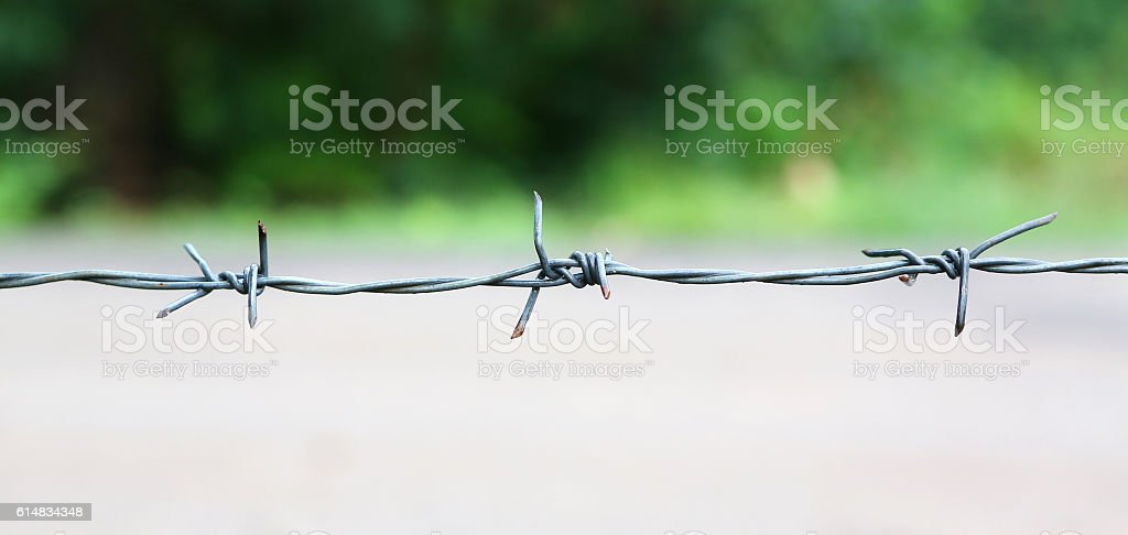 Rusty barbed wire. stock photo
