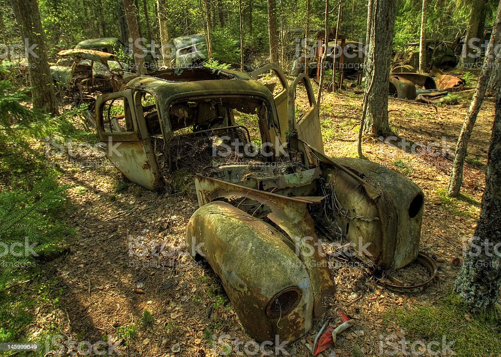 Rusty cars in a forest royalty-free stock photo