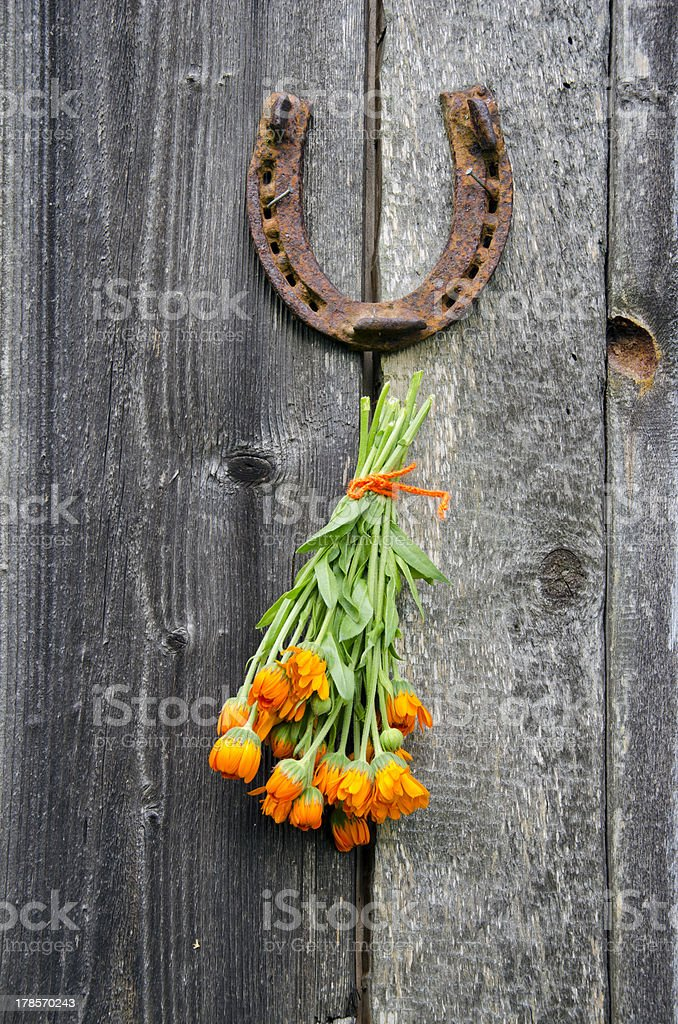 rusty horseshoe and calendula herb bunch on wall royalty-free stock photo
