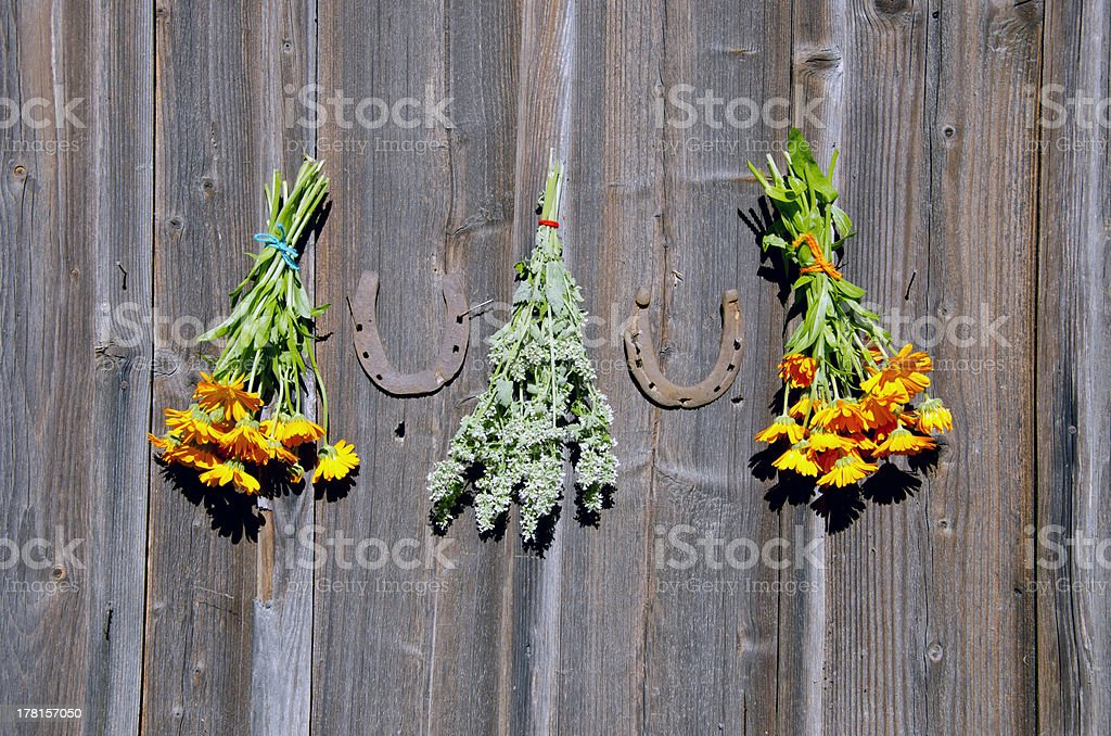 rusty horseshoe ant herb bunchs on wall royalty-free stock photo