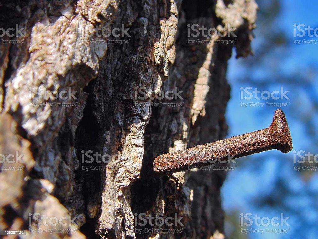 Rusty Nail in Tree royalty-free stock photo