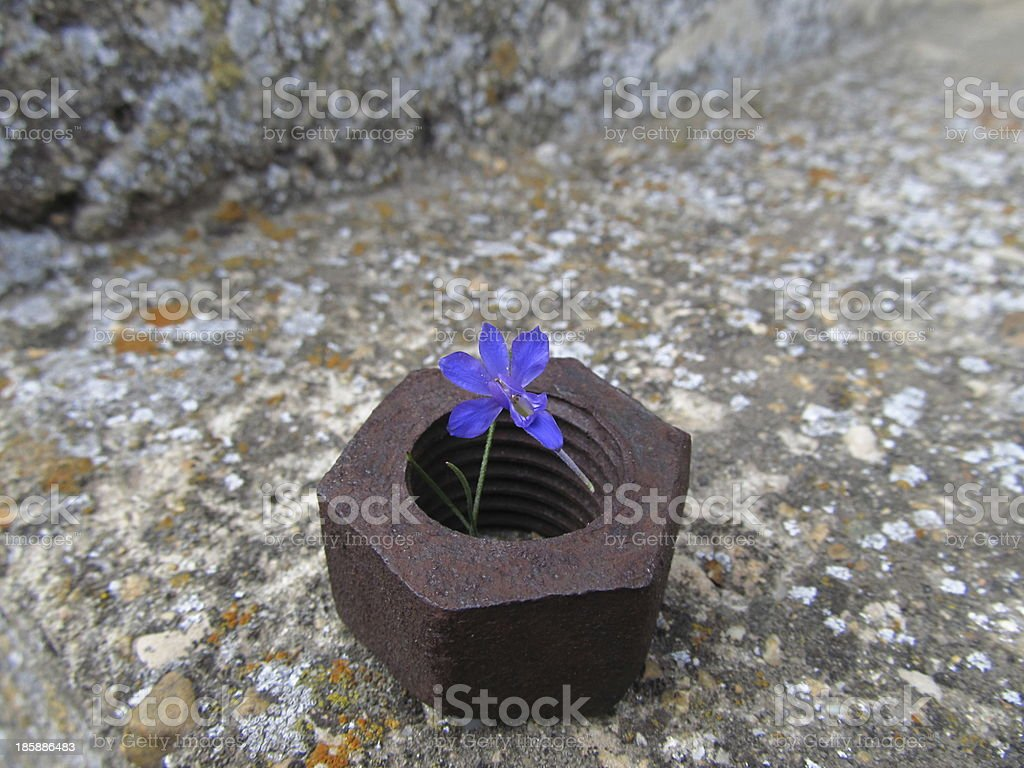 Rusty nut and flower royalty-free stock photo