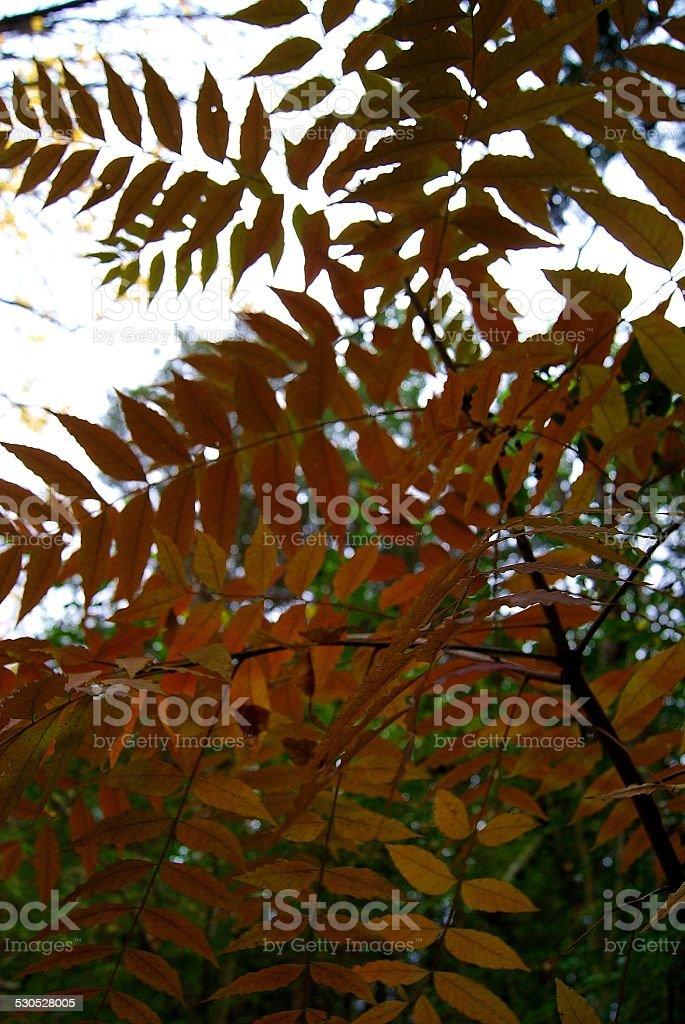Rusty Orange royalty-free stock photo