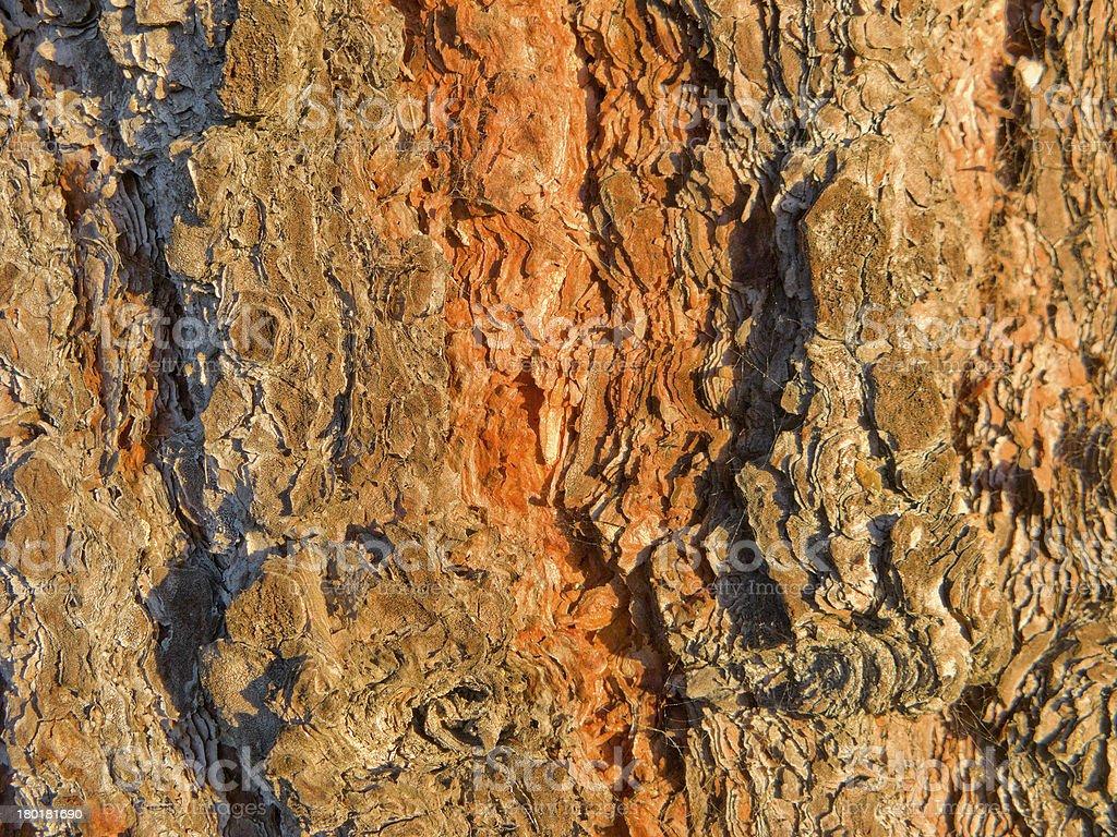 Rusty Pine Tree Bark royalty-free stock photo