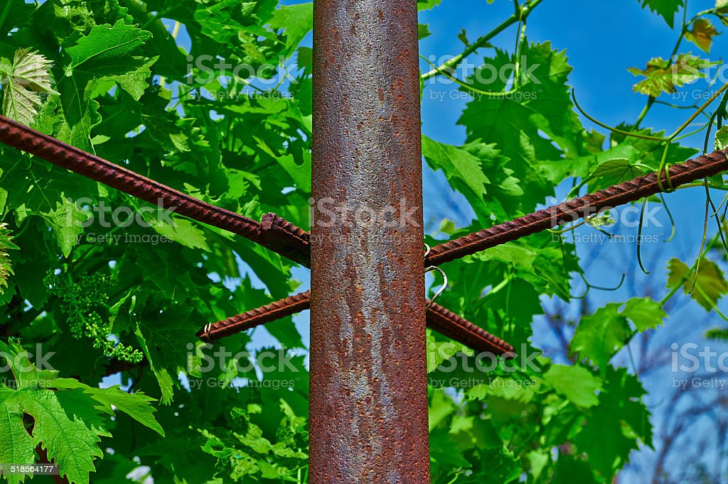 rusty pipe and vine royalty-free stock photo