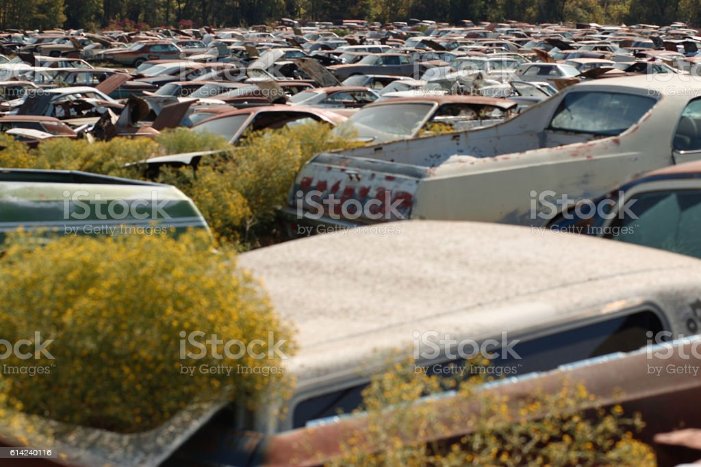 Rusty scrapped cars at a dump stock photo